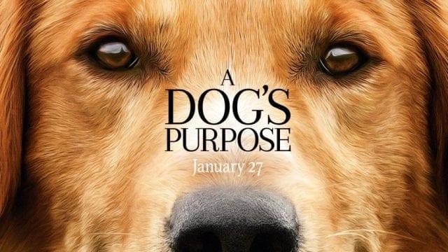 A Dogs Purpose 640x360