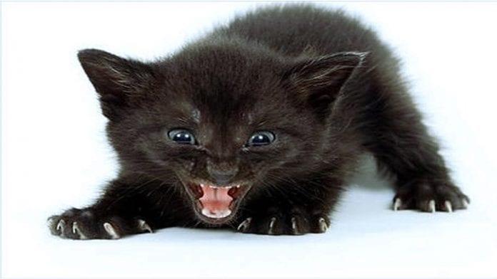 angry wet kitten - 1048×590