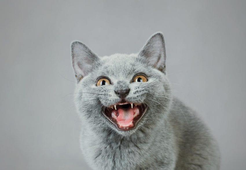 angry kitten waldek dabrowski 850x586
