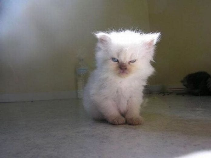 angry kittens 2