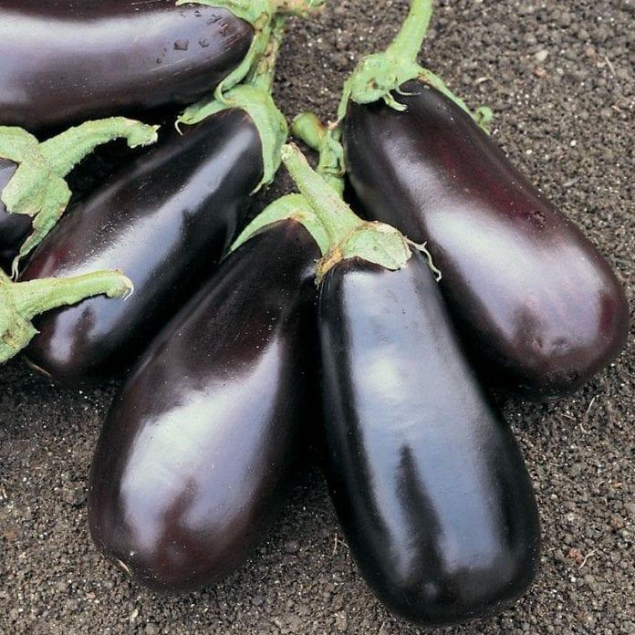Eggplant 696x696