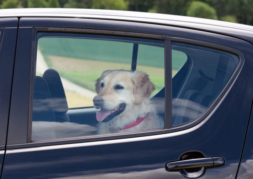 Dog in car3 850x603
