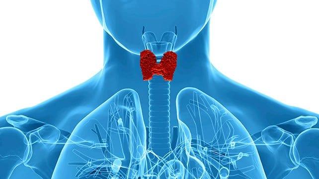 Thyroid Functio