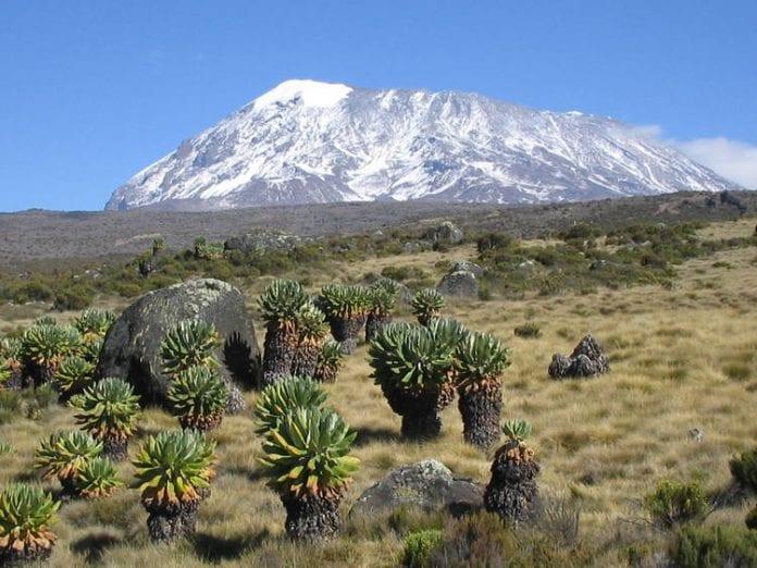 national park of Kilimanjaro