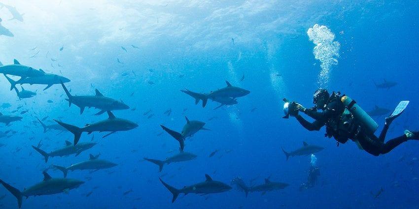 Shark Point 850x425
