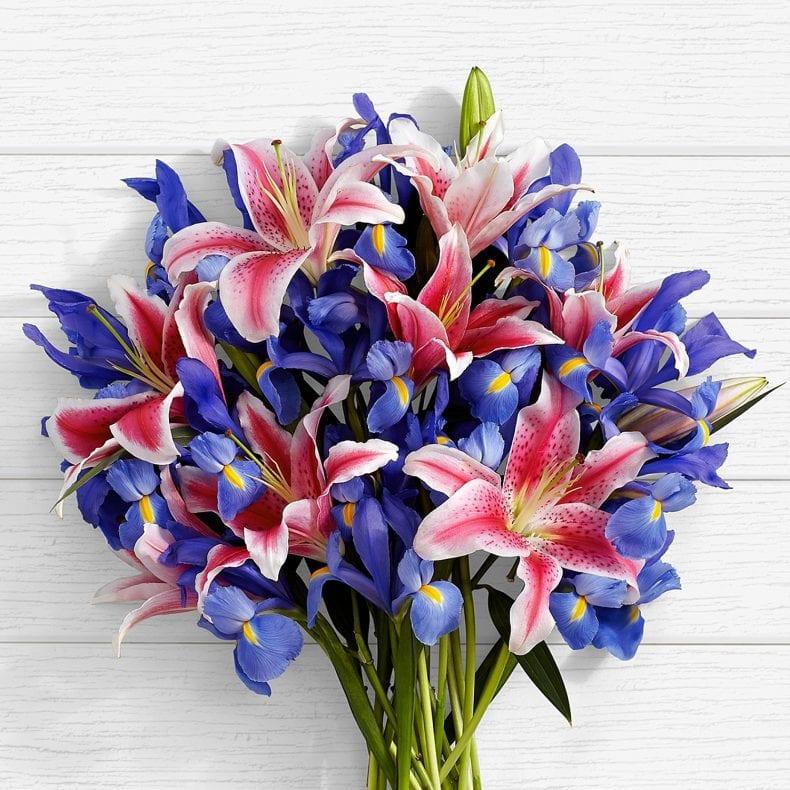 blue iris 790x790