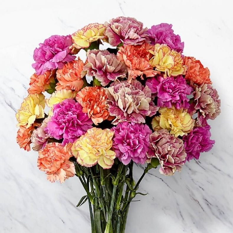 carnations 1 790x790