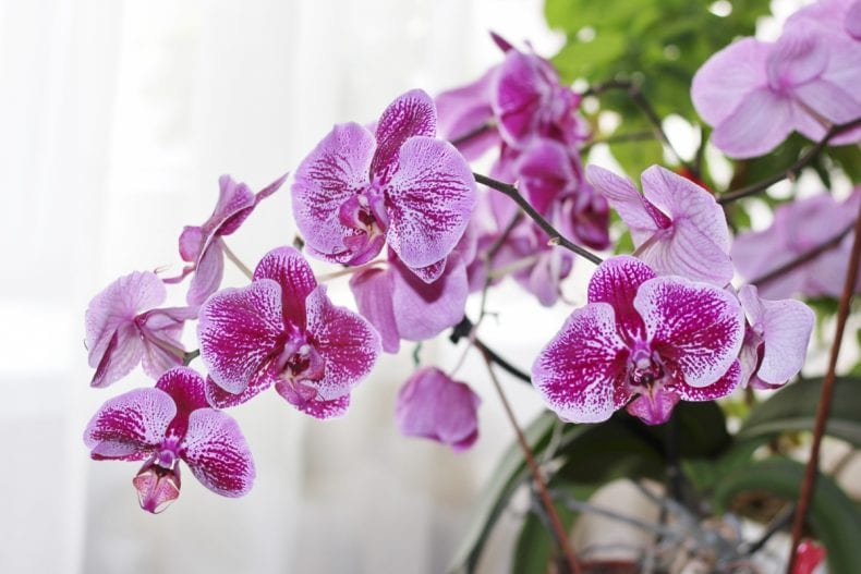 orchids 790x527