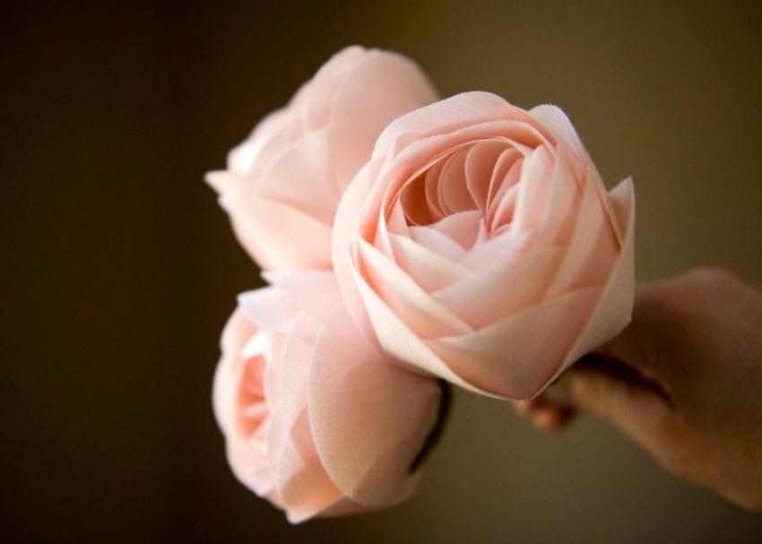 rose 850x607