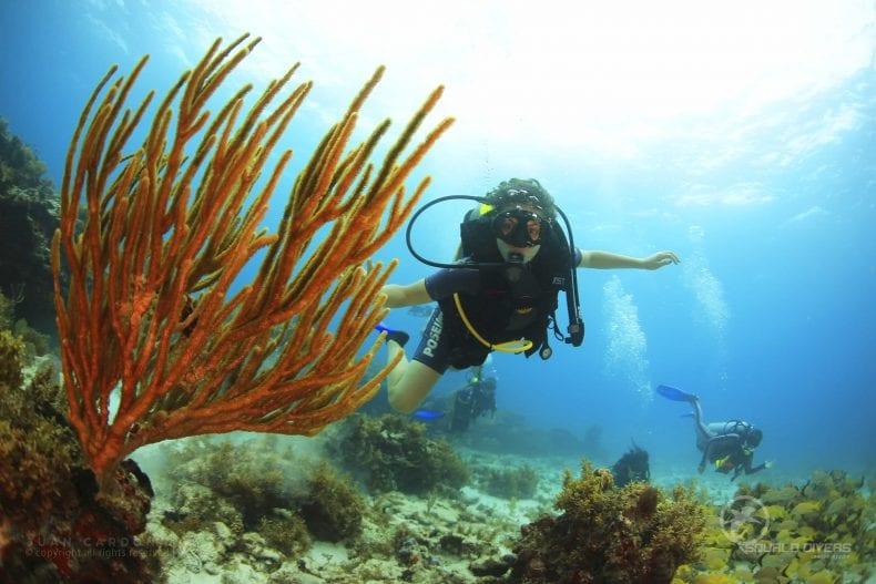scuba diving in Cancun 790x527
