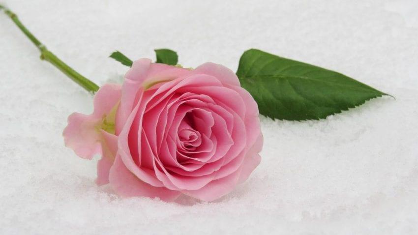 flower2 850x478