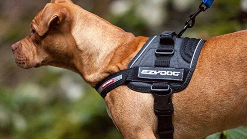 pet harnessed 850x478